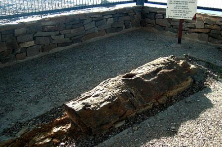 El árbol fósil de Igea