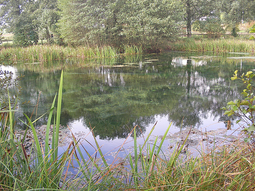 Laguna de Fonmiña