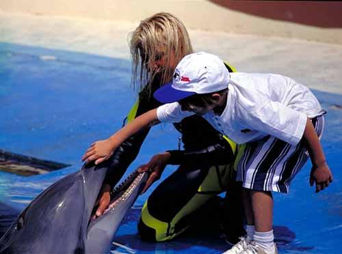 Espectáculo de los delfines