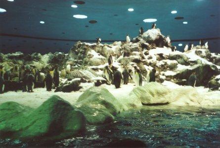 Pingüinos del Loro Parque