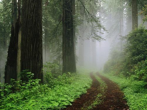 El Bosque de Muniellos en Asturias