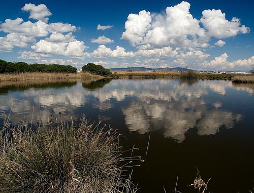 El Parque Natural de Aiguamolls de l'Empordá