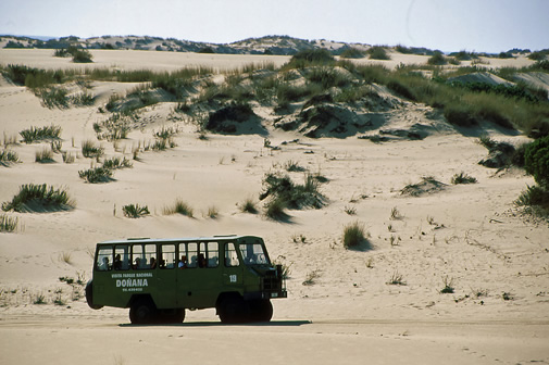 Ruta 4x4 en Doñana