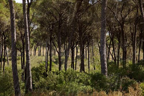 Ecosistemas y visitas guiadas en Doñana
