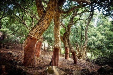Parque Natural de los Alcornocales en Cádiz