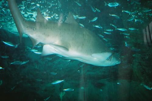 El Aquarium Palacio del Mar de Donostia en San Sebastián