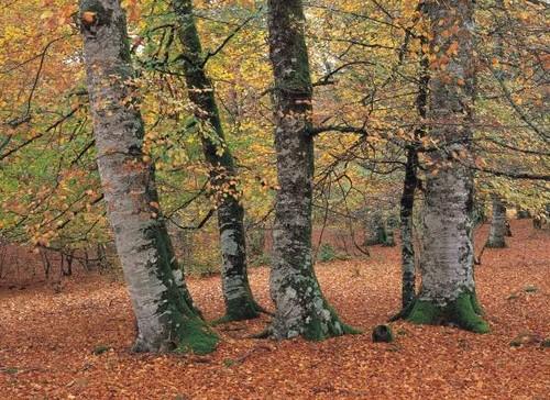 El Parque Natural Señorio de Bertíz en Navarra