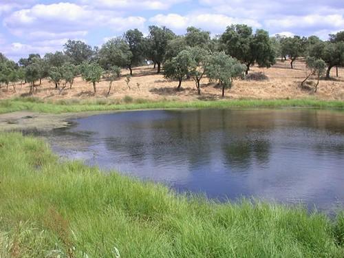 Parque Natural Sierra de Cardeña y Montoro en Cordoba