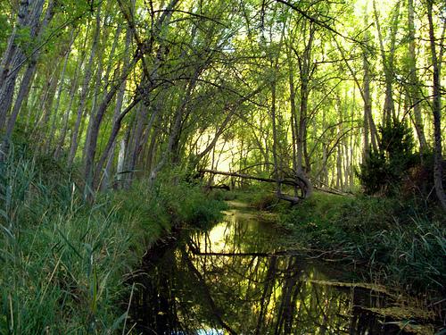 Parque Natural del Barranco del Río Dulce en Guadalajara