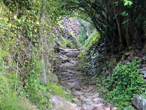 Ruta del Bosque de Pomes en Asturias