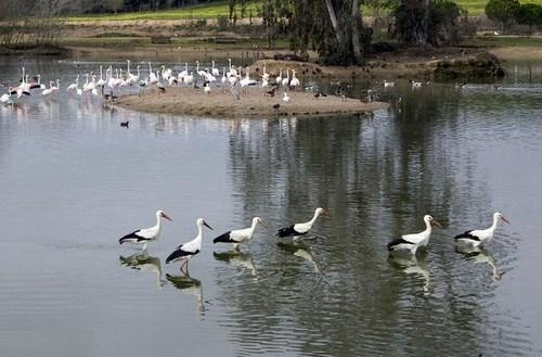 Reserva Natural la Cañada de los Pajaros en Sevilla