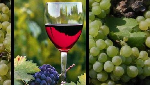 Enoturismo en La Rioja Alavesa