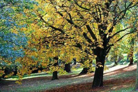 Ruta de la castaña, senderismo en otoño